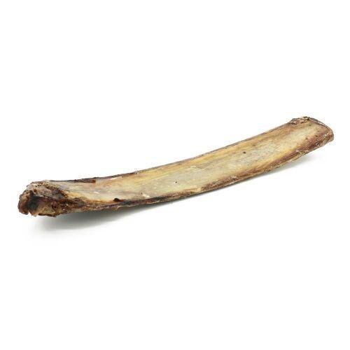 12 Inch Beef Rib Bones